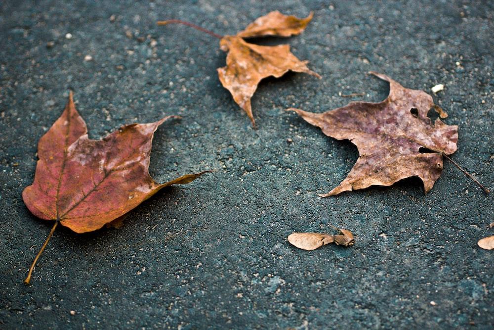three dried leaves
