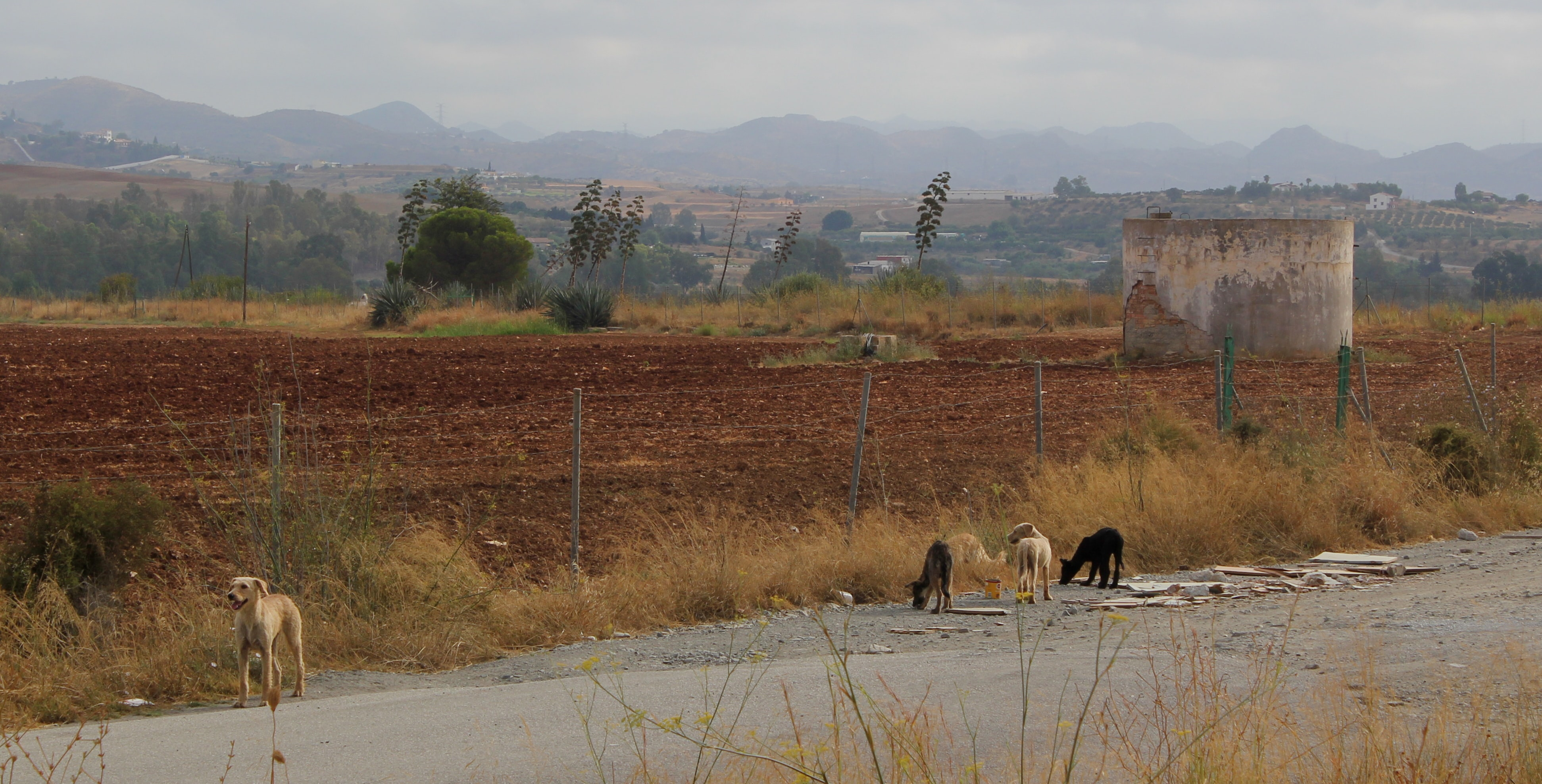 pack of black and fawn dogs on road