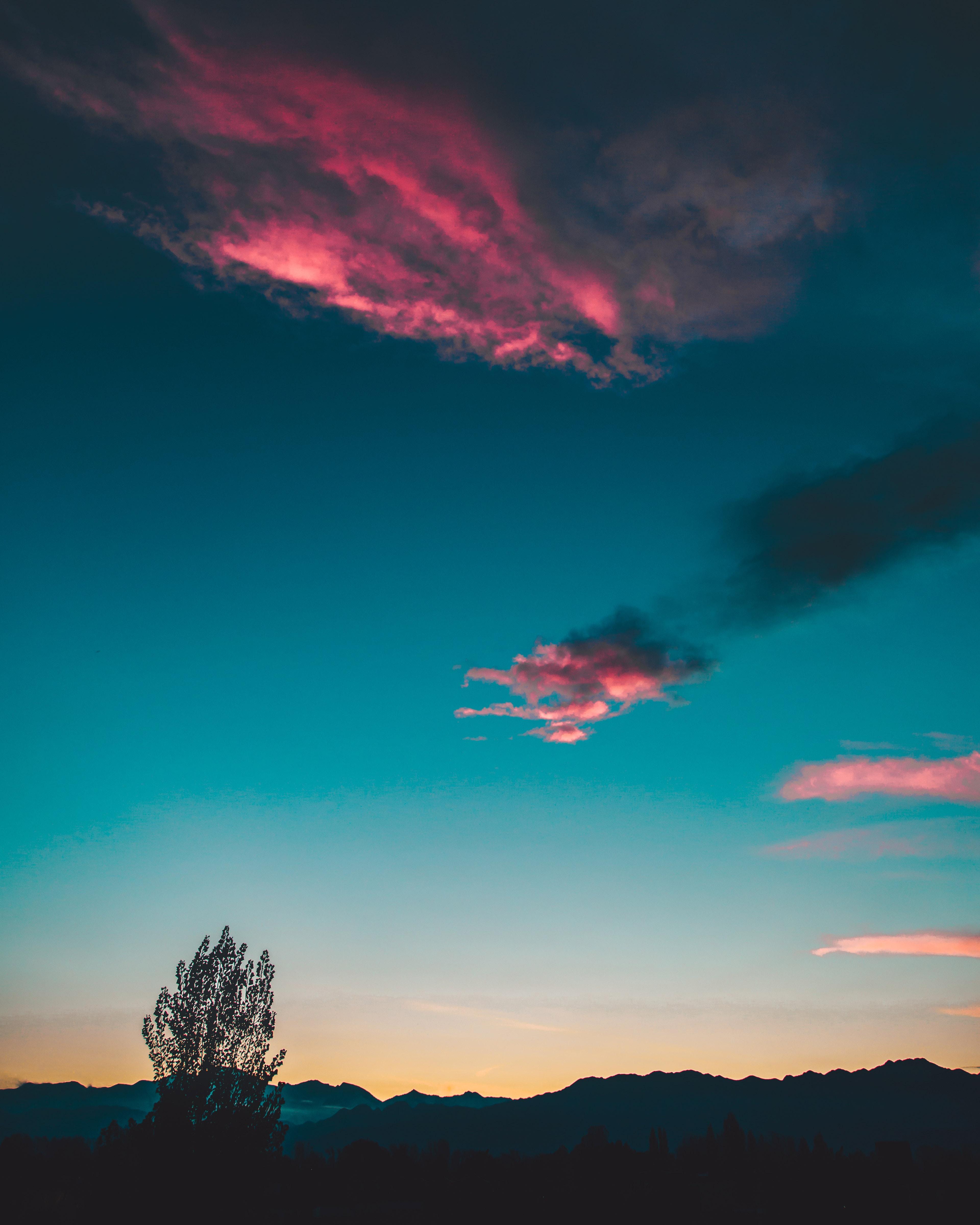 silhouette of tree under sunset
