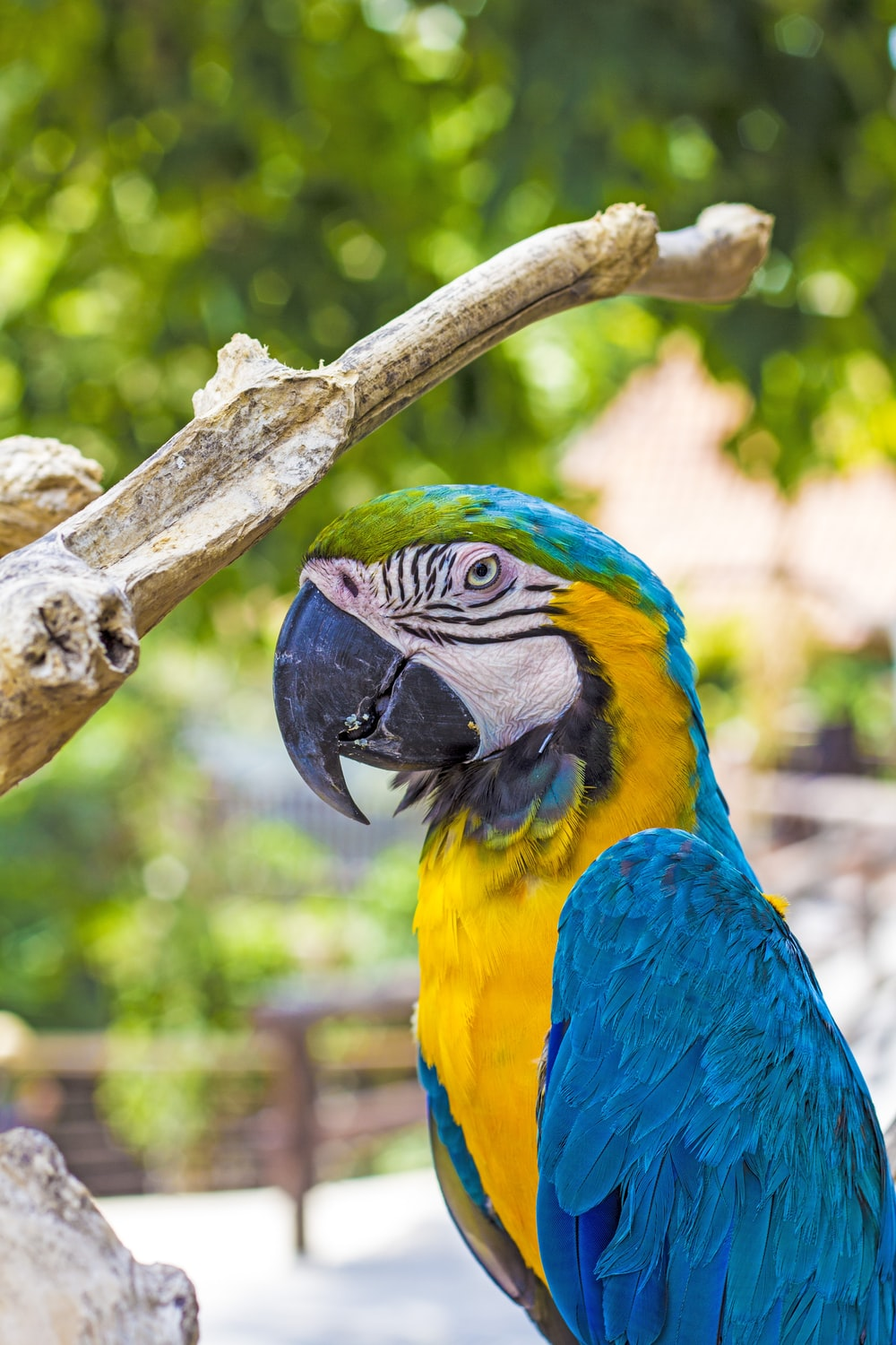 Bali Bird Park Indonesia Pictures Download Free Images On
