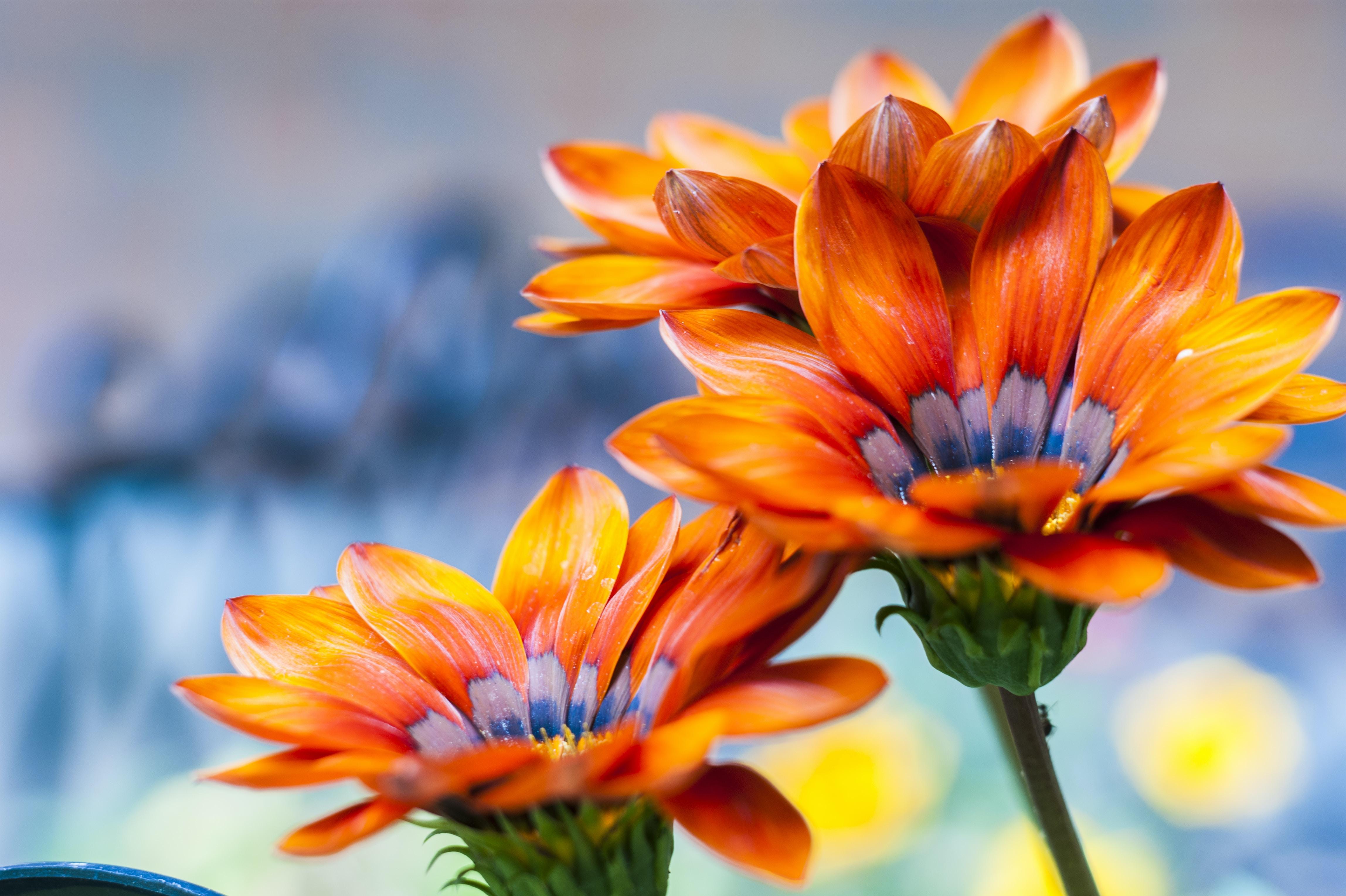 selective focus photography of orange petaled flowers