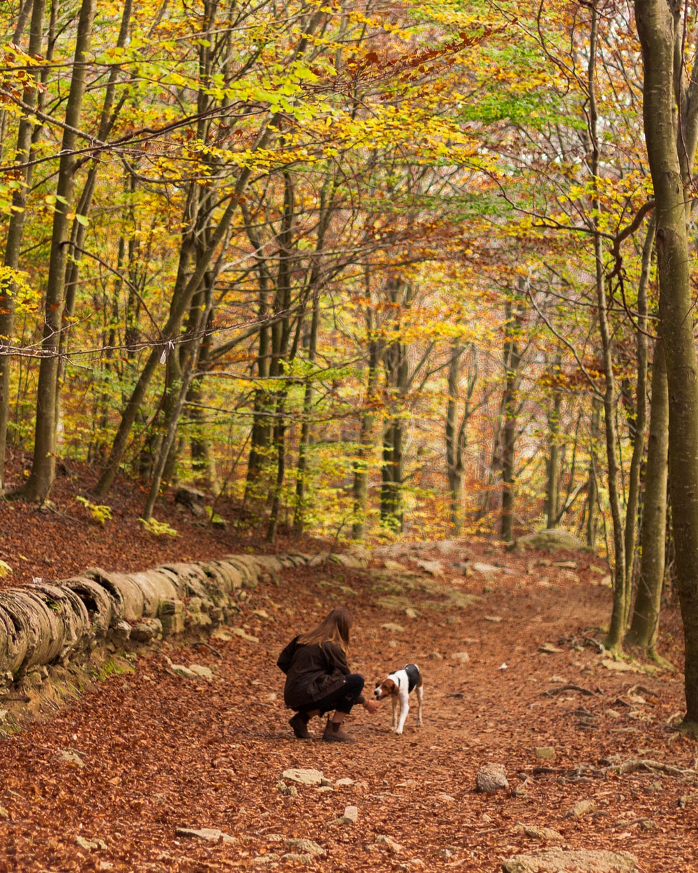 woman playing with tricolor dog in the forest