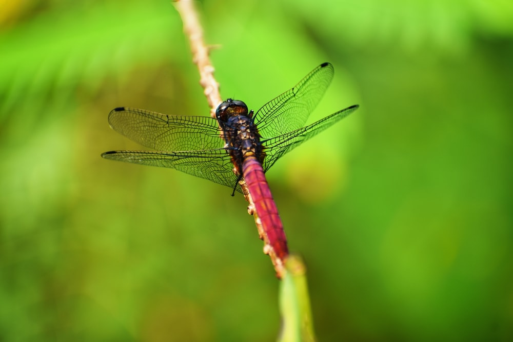 shallow focus photography of pink insect