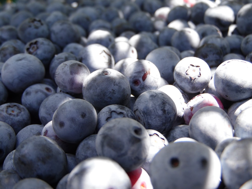 bunch of blueberries