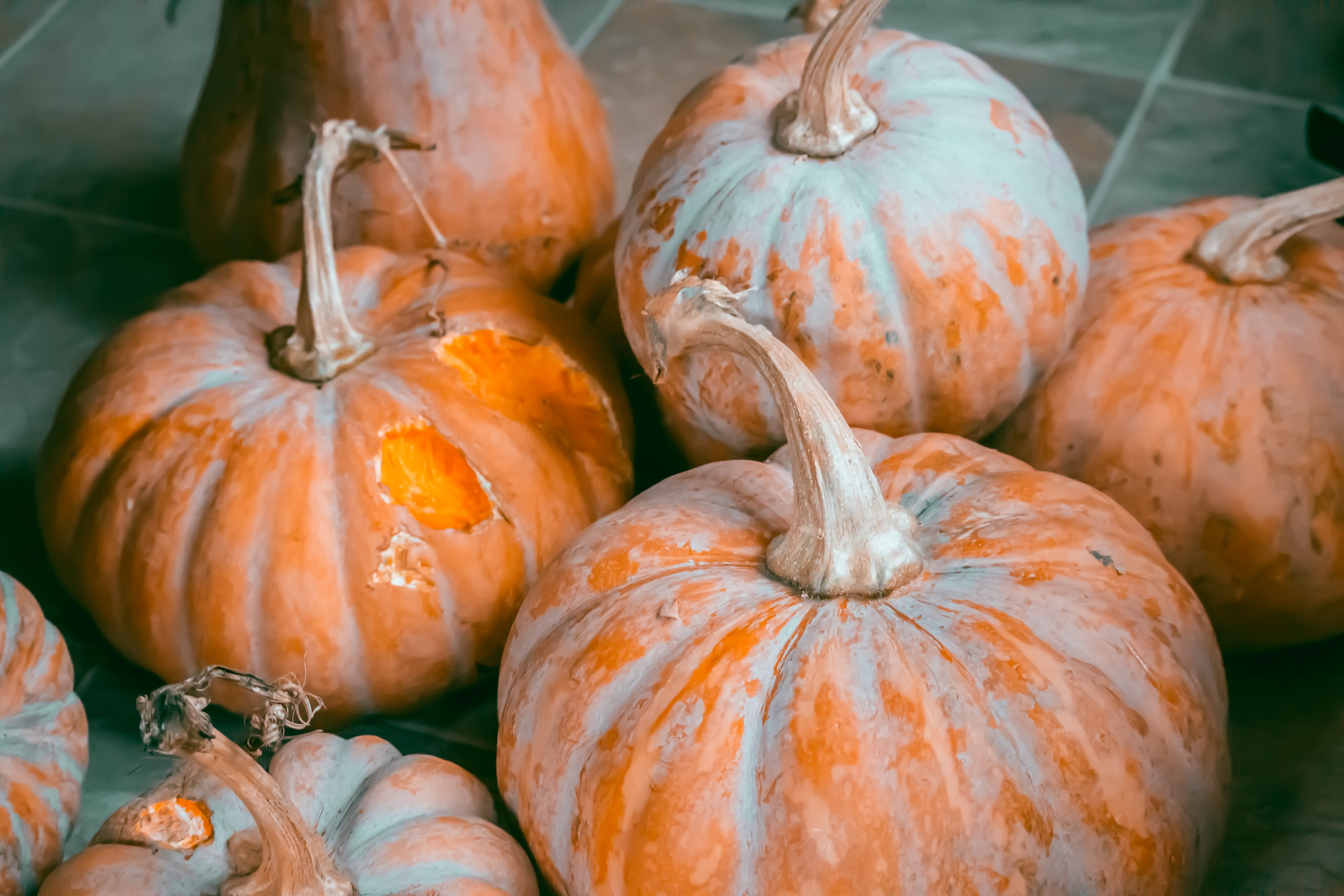 shallow focus photography of squashes