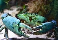 shallow focus photography of green crab