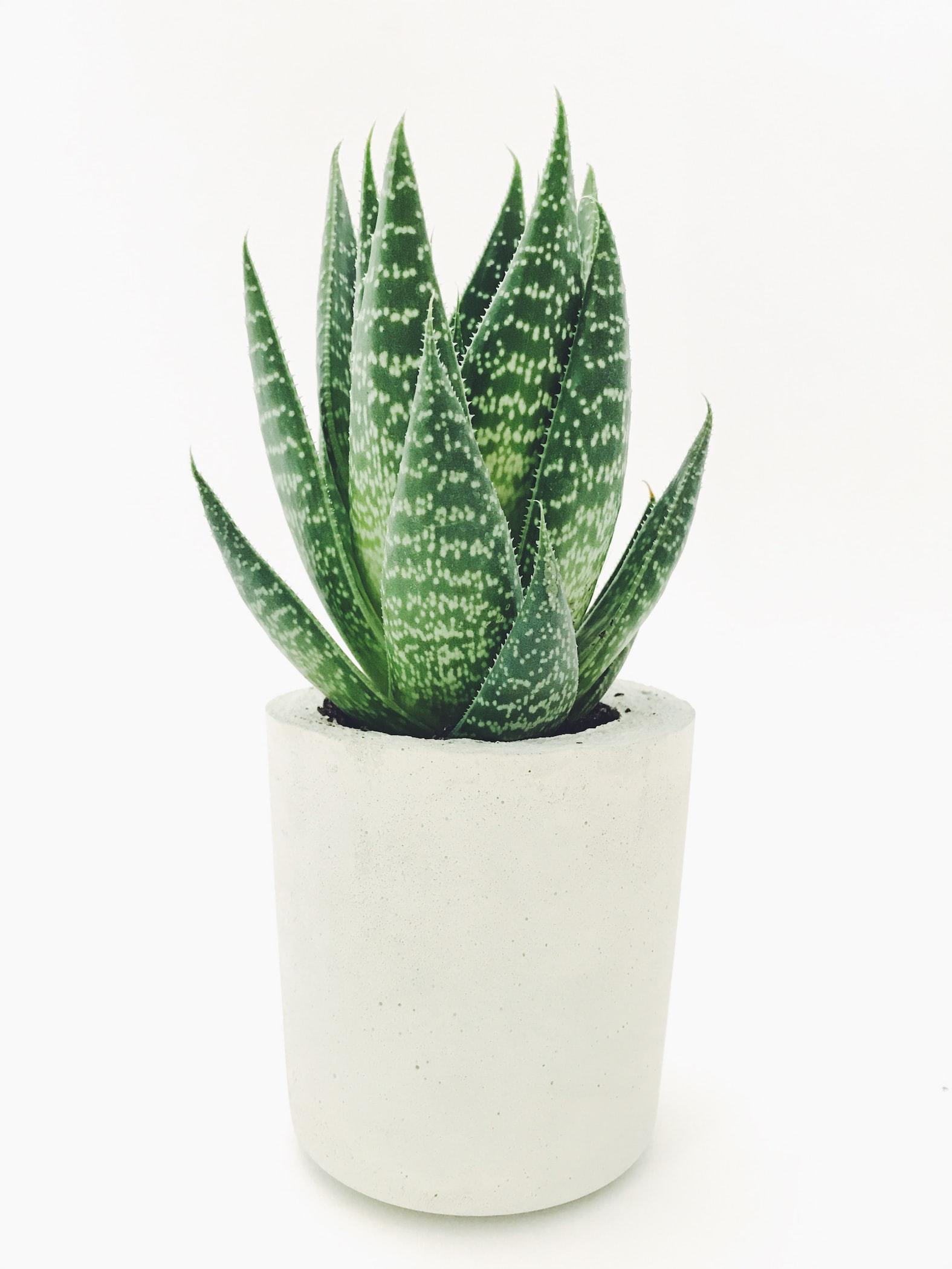 Best-Houseplants