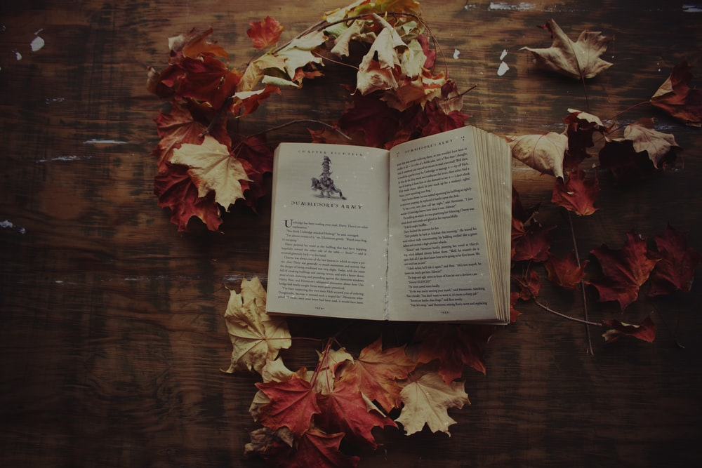 opened book surrounded with maple leaves on brown surface
