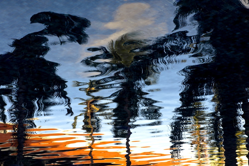 reflection of palm trees on body of water