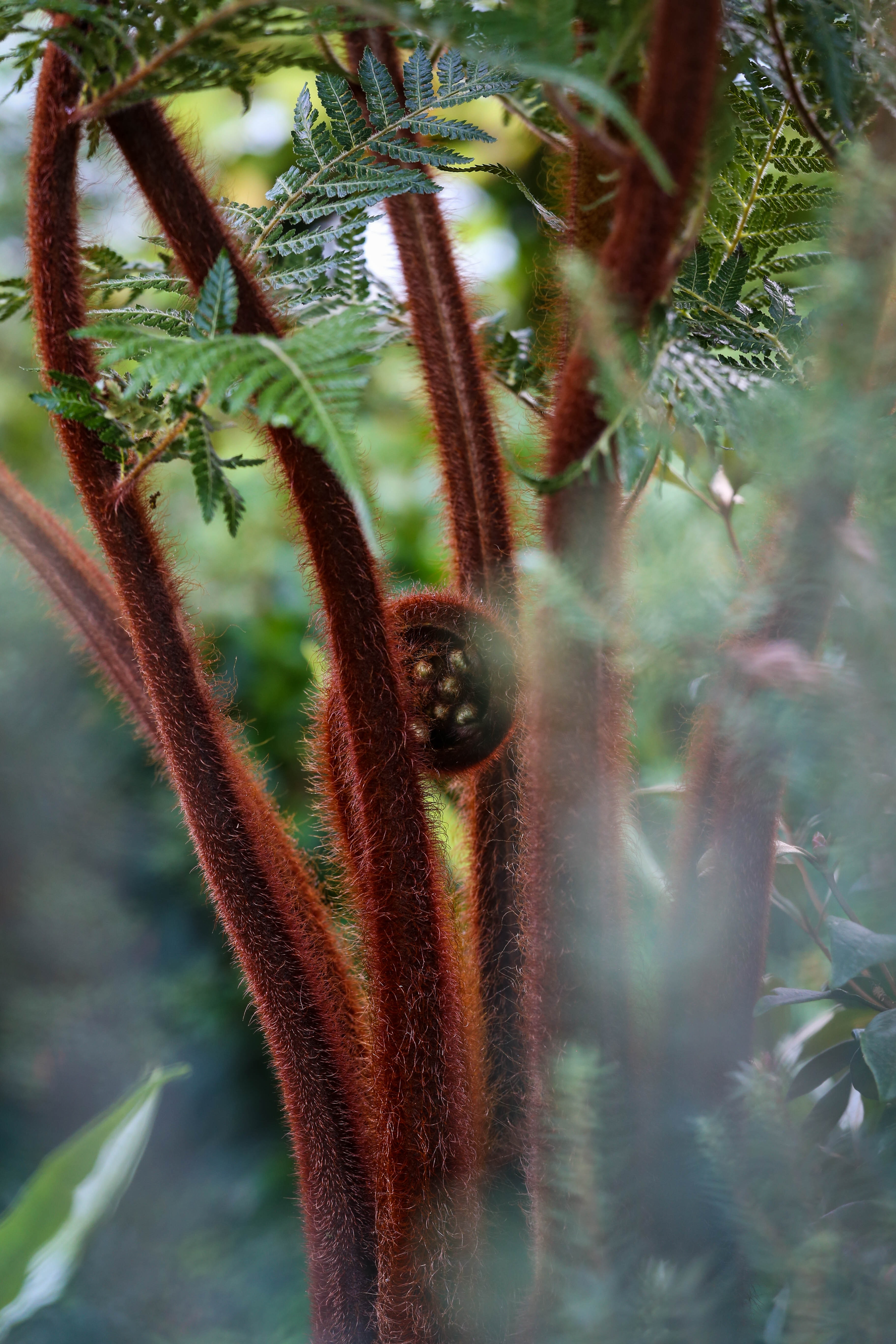selective focus photography of brown plant in forest