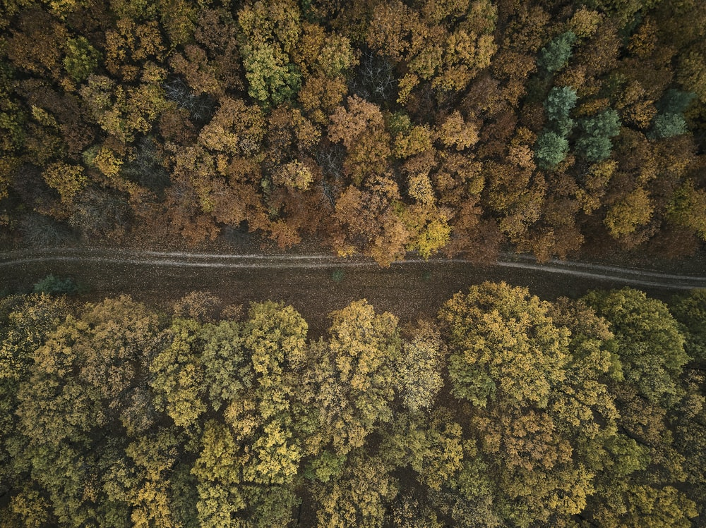 bird's-eye view photography of road between forest
