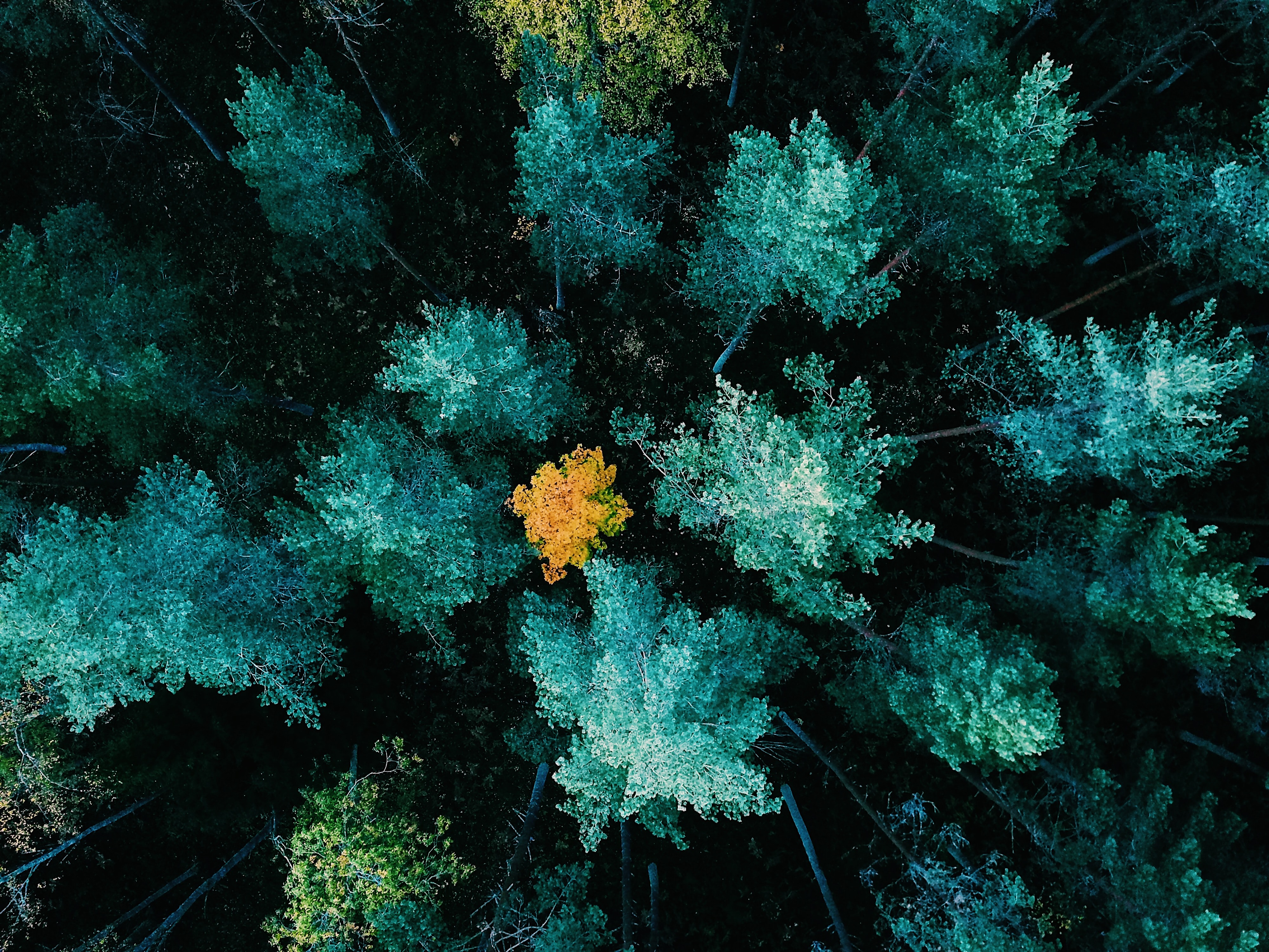 aerial view photography of green trees on woods
