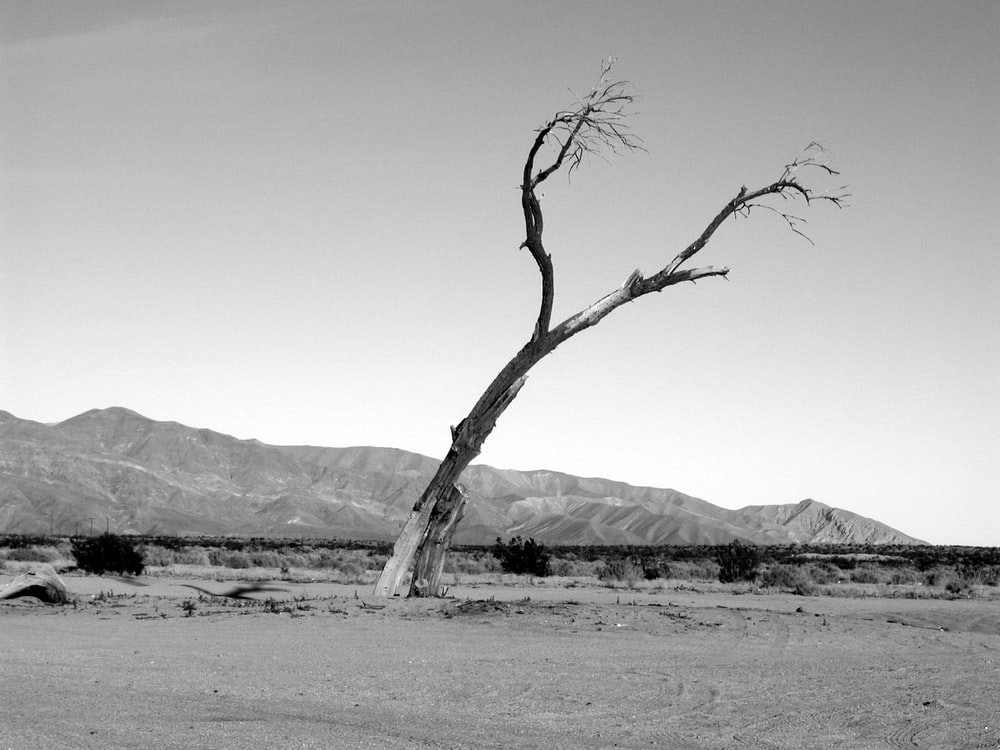grayscale of tree