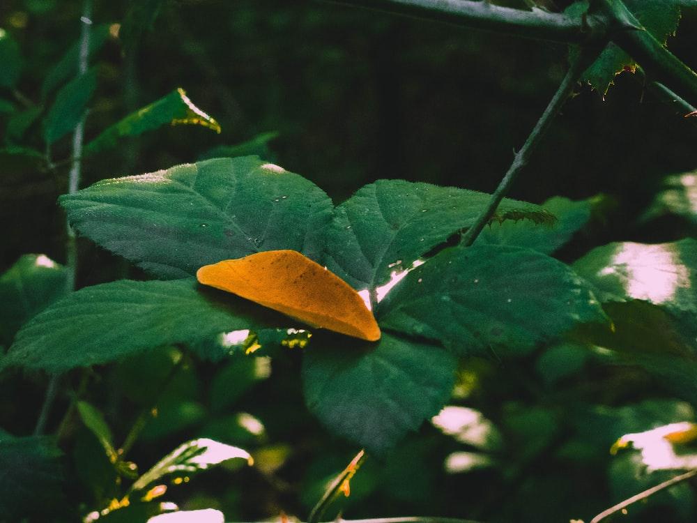 dried leaf on green leafed plant