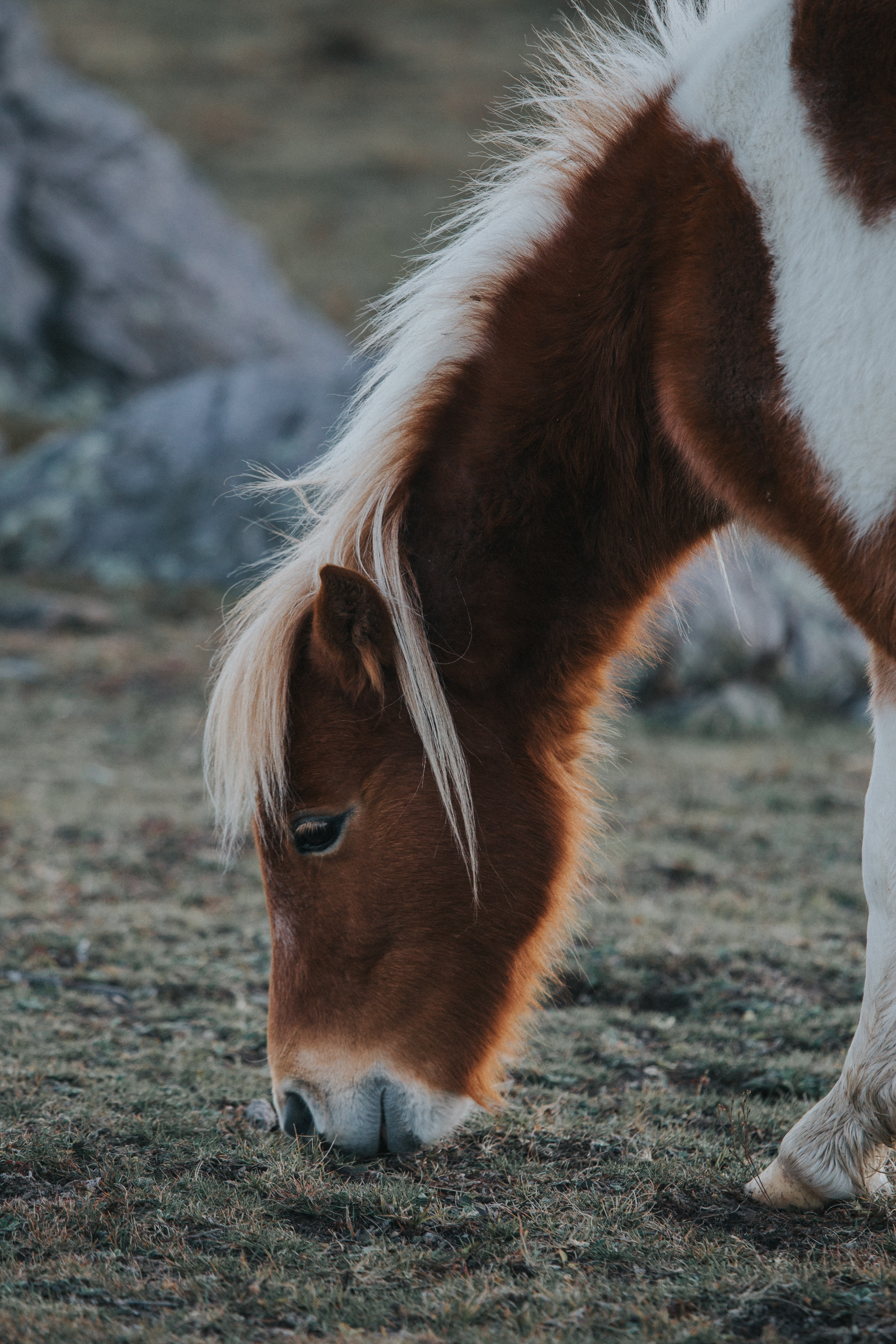 shallow focus photography of brown pony