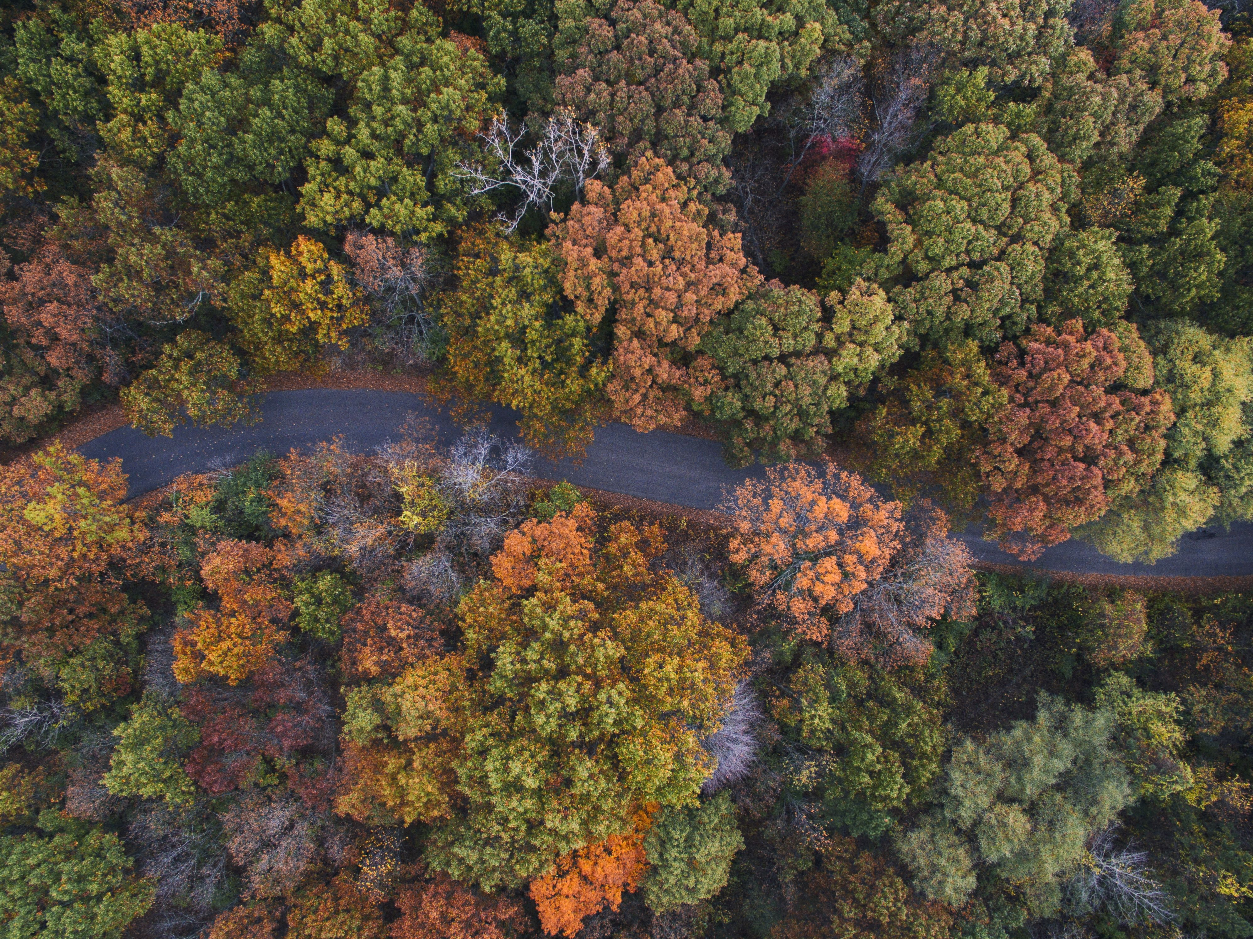 aerial photo of gray winding road in the middle of assorted-color leaf trees