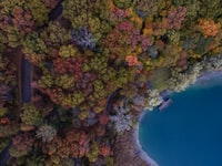 aerial photo of red and green trees near body of water