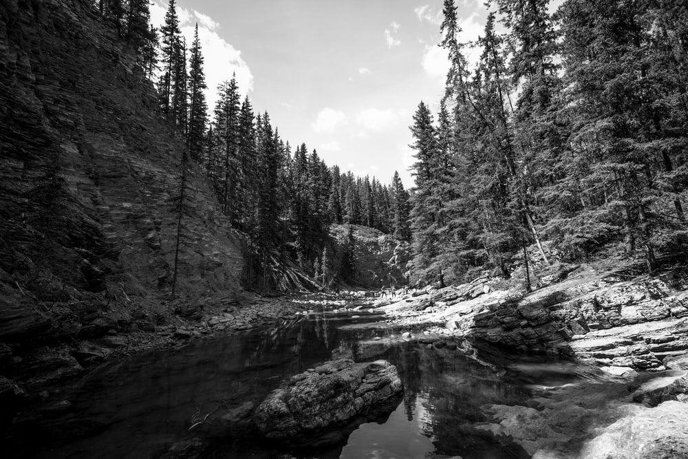 grayscale photo of trees near river