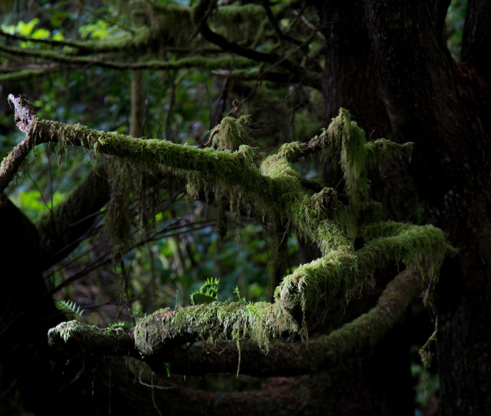 green moss on brown tree trunk