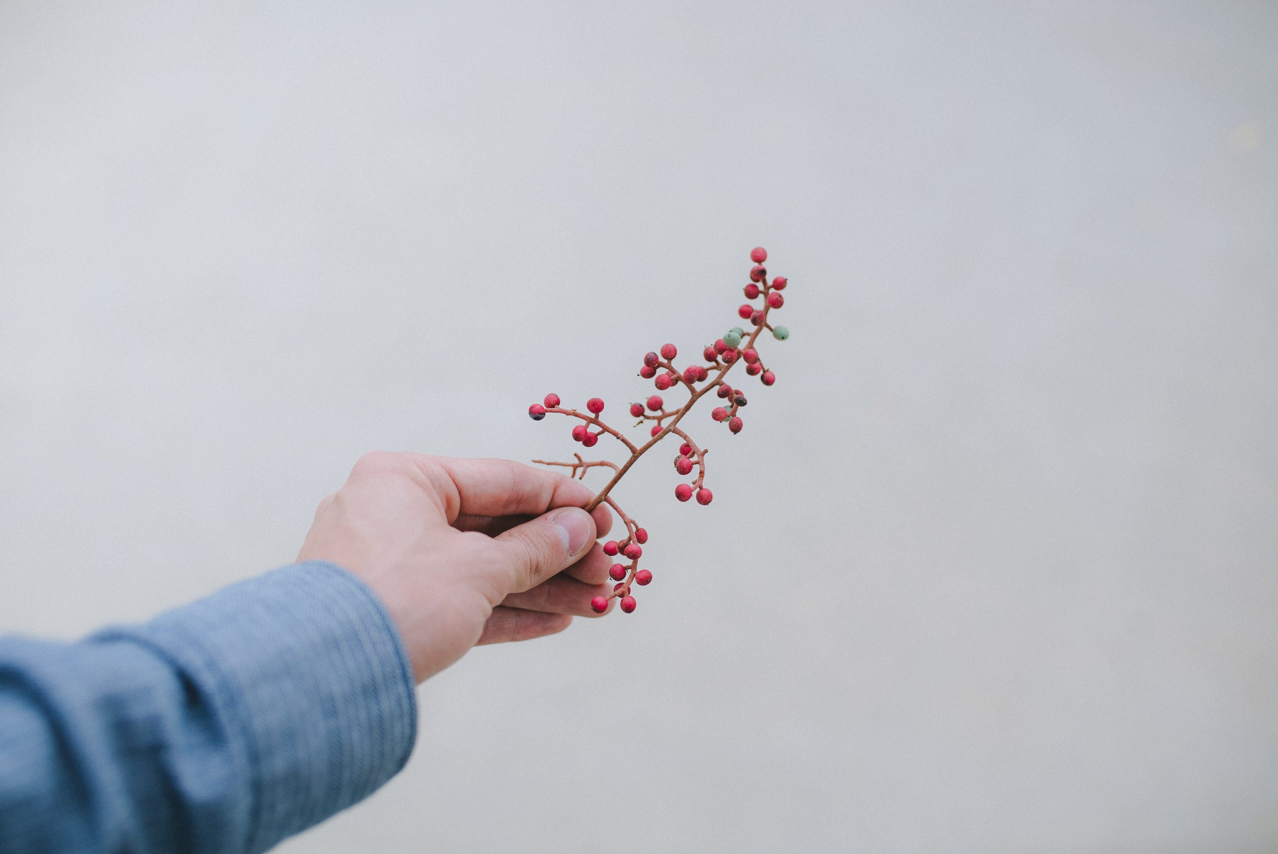 person holding bunch of small red fruits