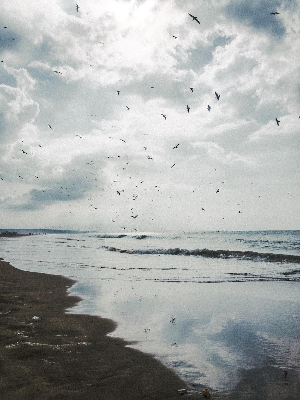 flock of black flying birds flying over the ocean