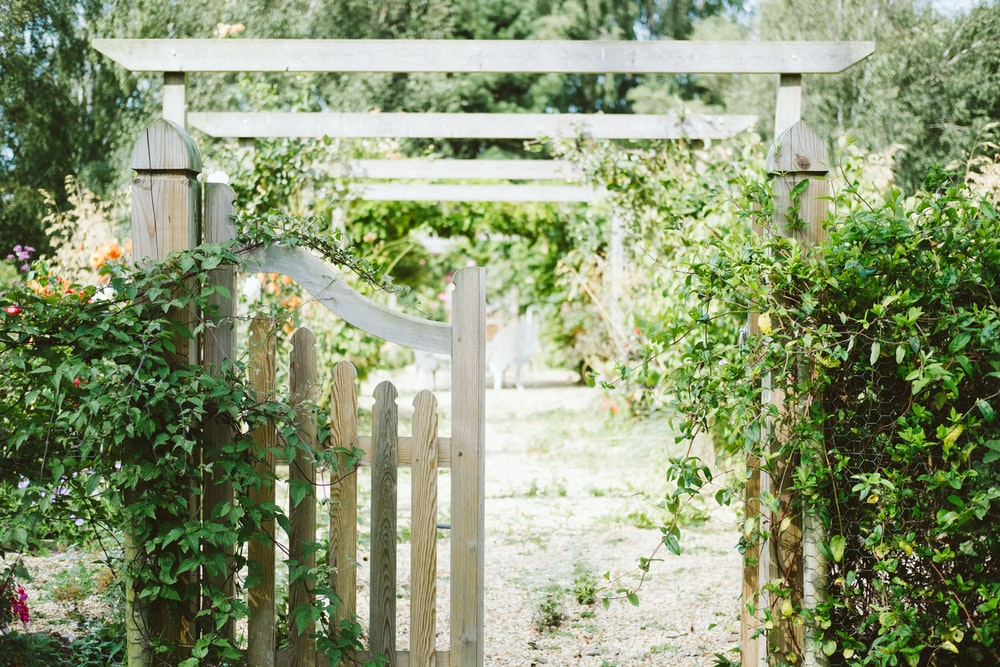 beige wooden fence covered with green vine plants