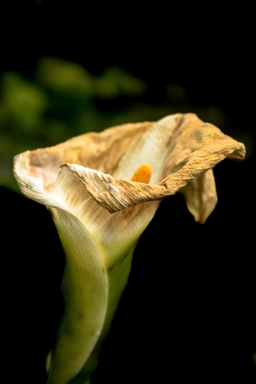 dried white petaled flower