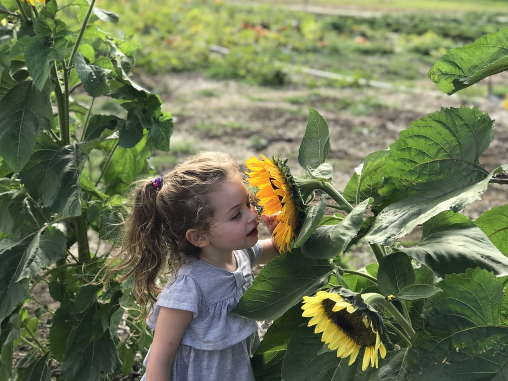 selective focus photo of girl smelling sunflower