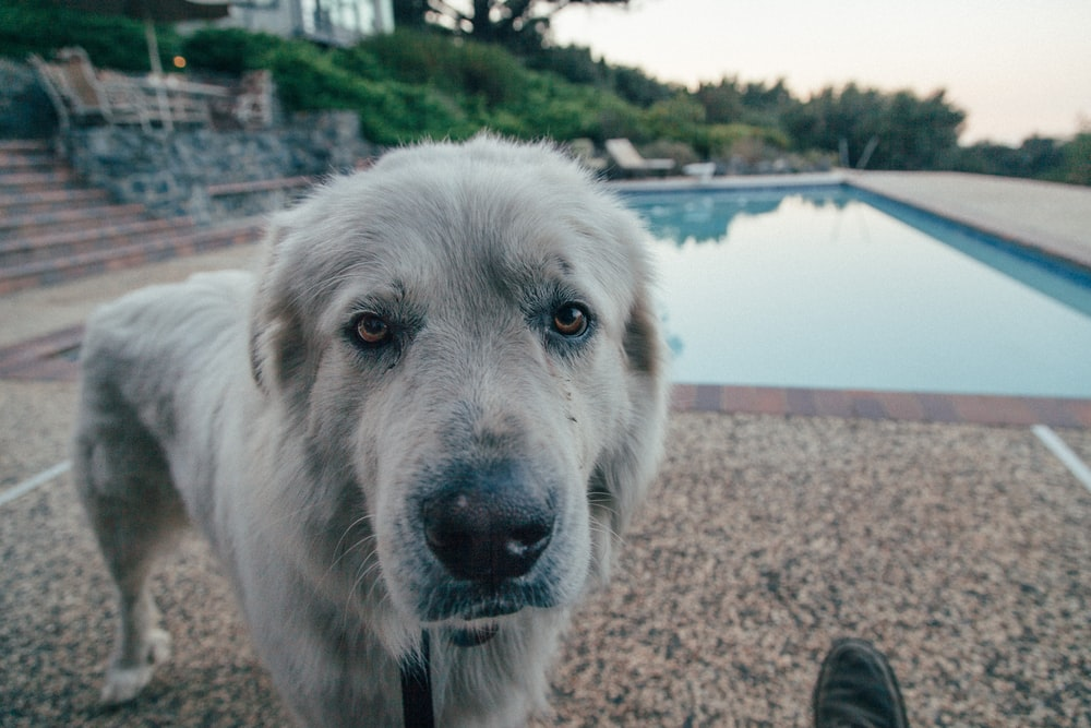 photography of gray dog