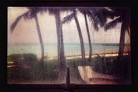 window view of coconut palm trees near sea