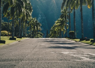 concrete road between palm trees during daytime