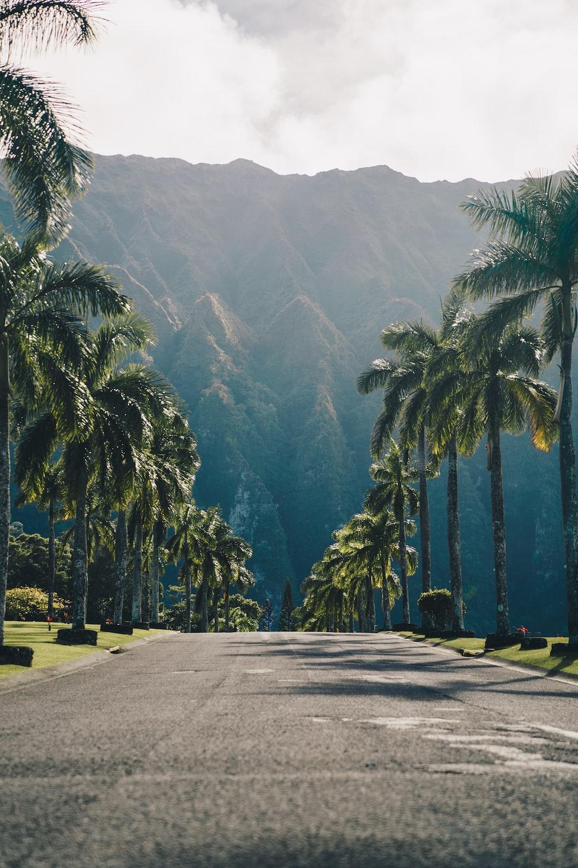 Hawaii Wallpapers Free Hd Download 500 Hq Unsplash