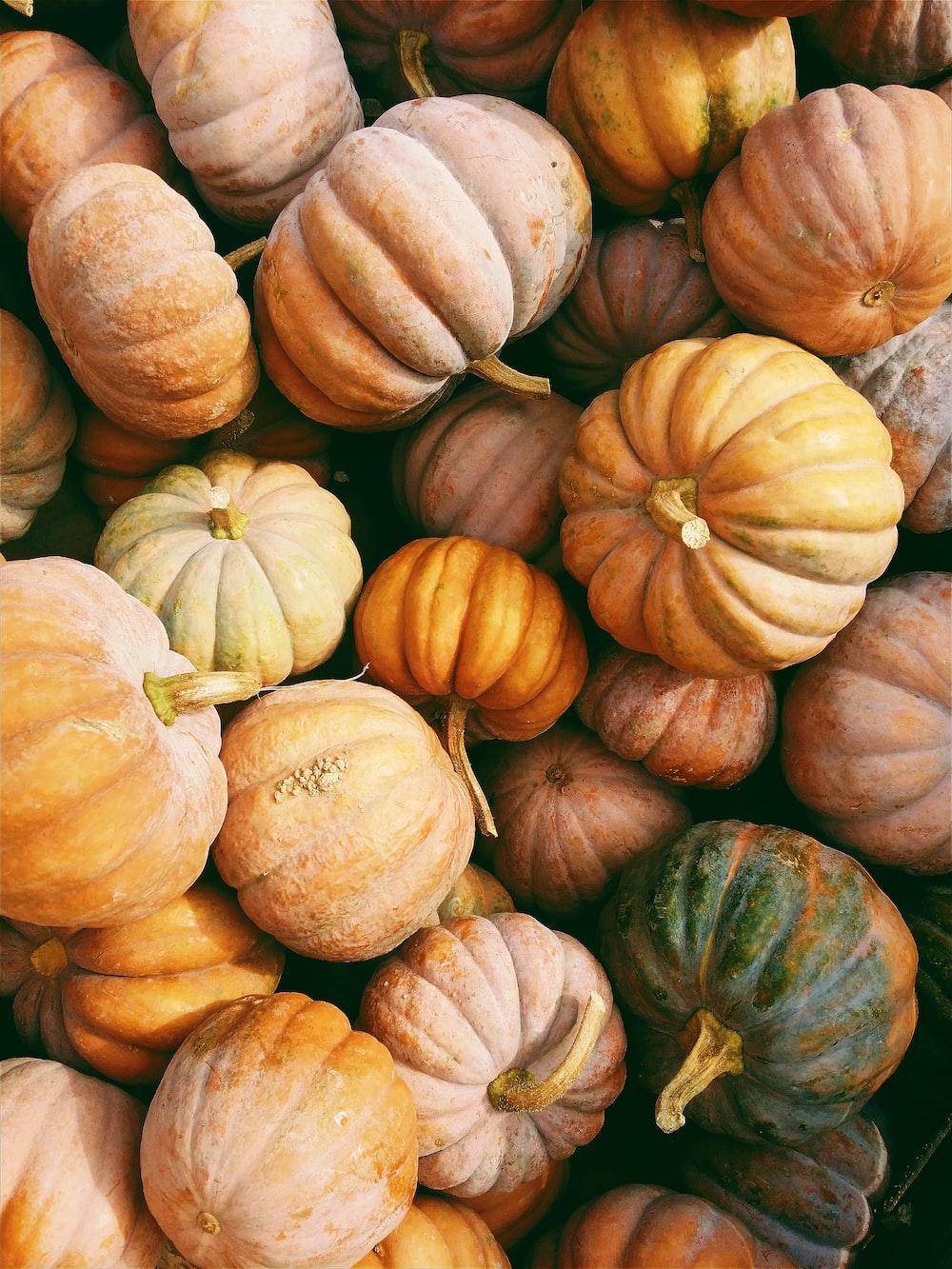 photo of orange and green squash lot