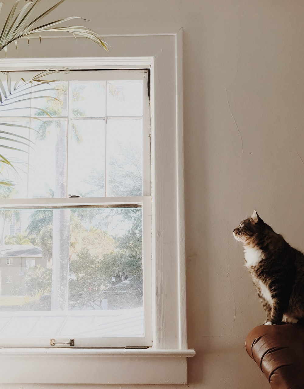 medium-fur brown and white cat sitting on brown sofa near white window