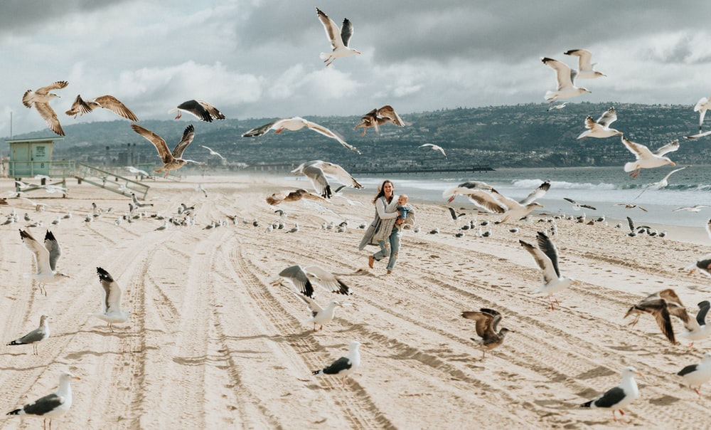 woman running on beige shore with birds during daytime
