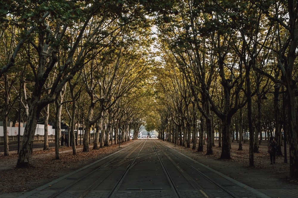 road lined with green trees at daytime