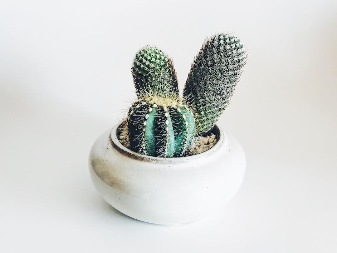 Bodhi Cactus Arrangement