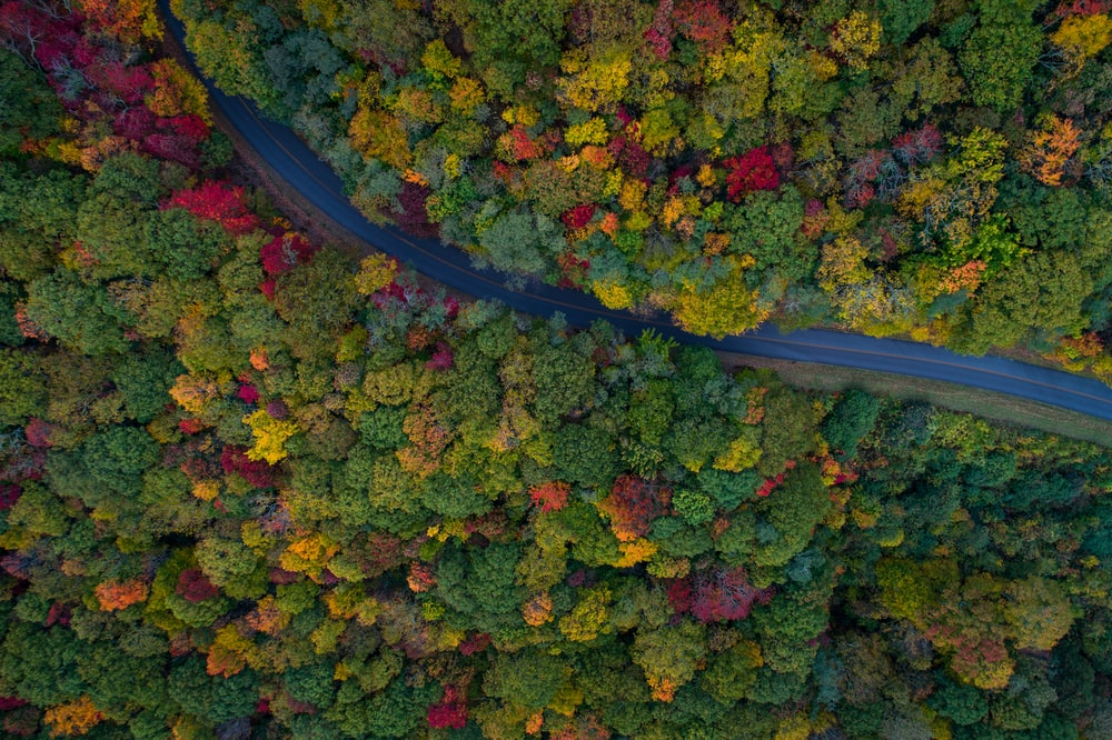 aerial photography of gray asphalt road on forest