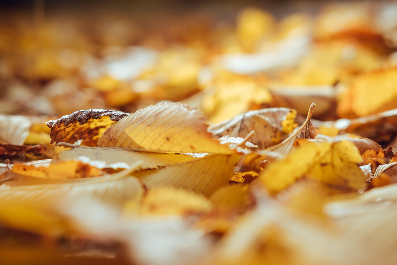 tilt shift lens photography of leaves