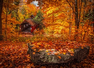 wooden house in forest during day