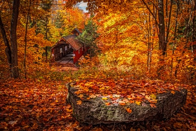 wooden house in forest during day autumn zoom background
