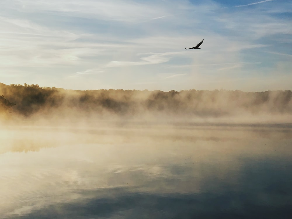 eagle gliding near fogging lake