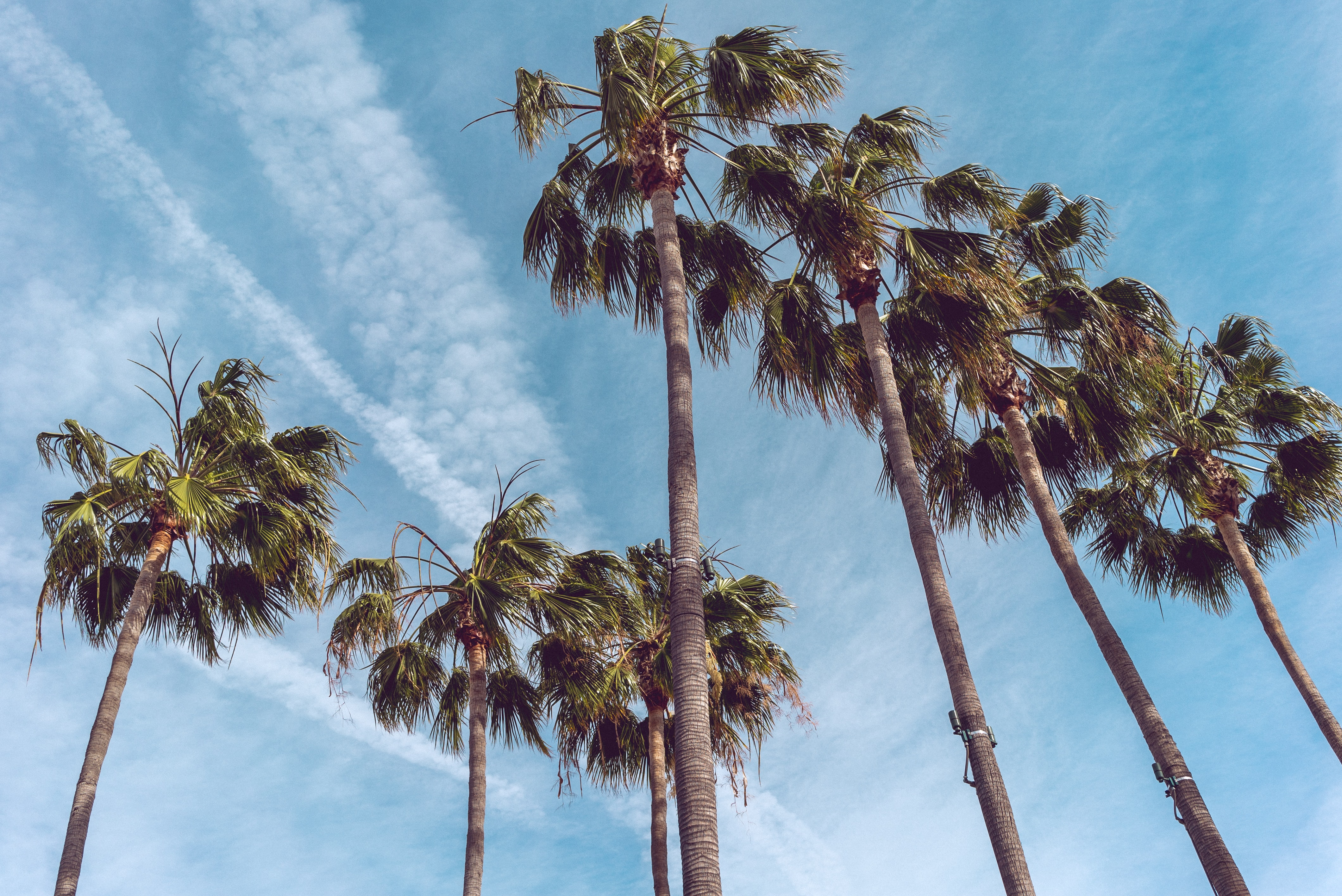 seven coconut trees at daytime