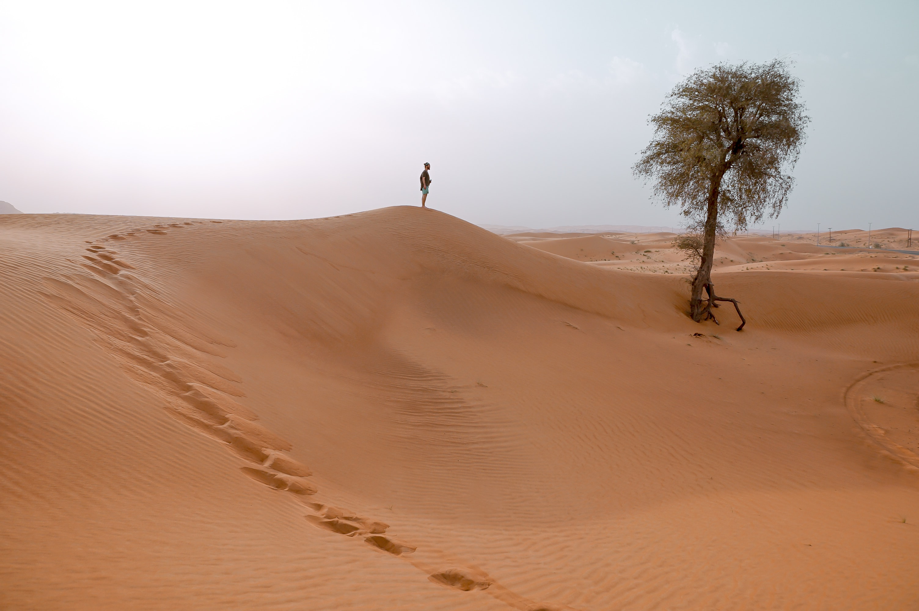 person standing on sand dune near the tree