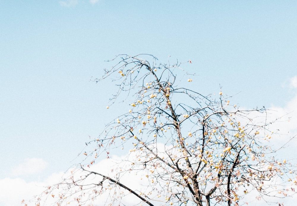 white leaf tree under blue and white sky