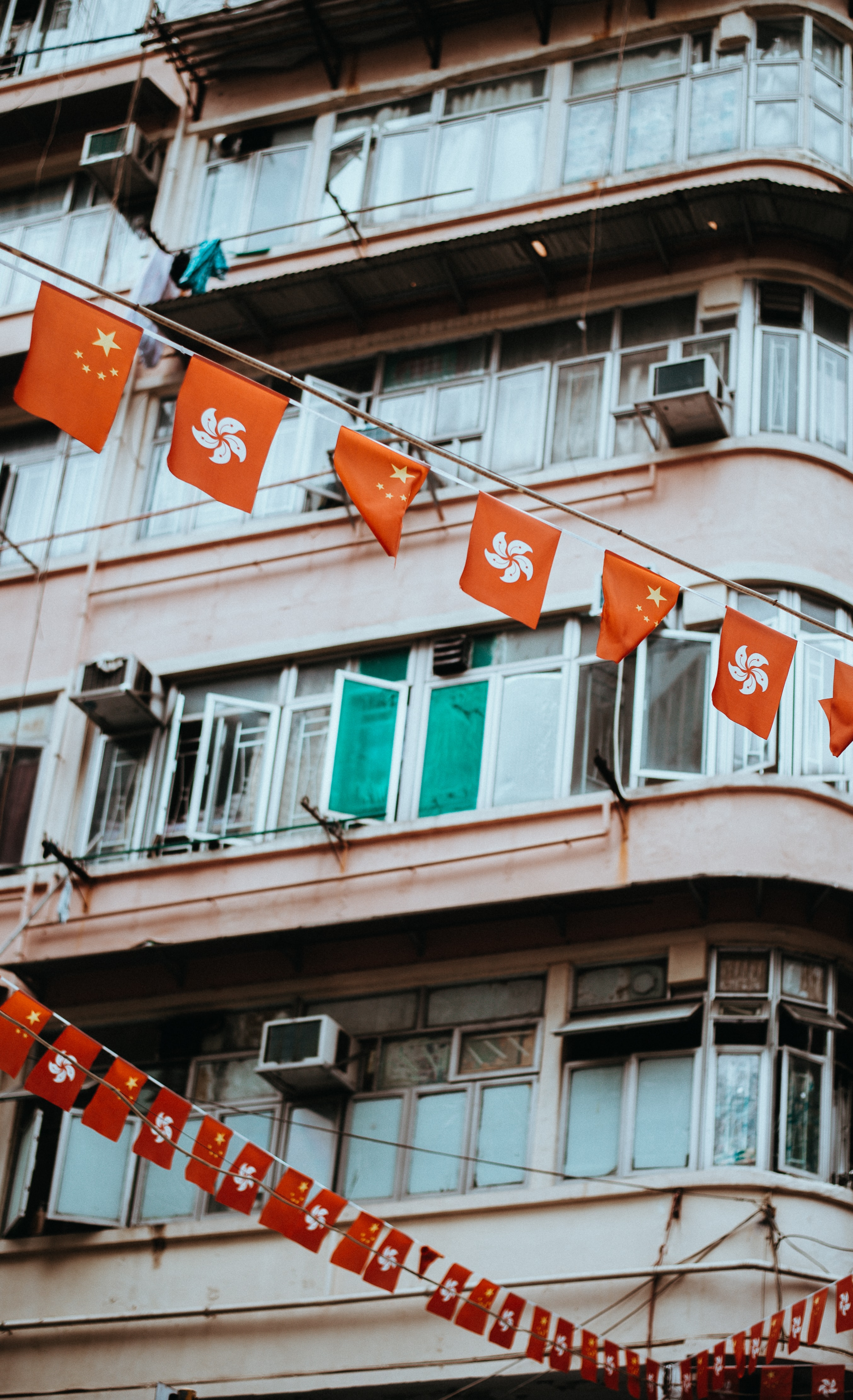 closeup photo of orange flaglets