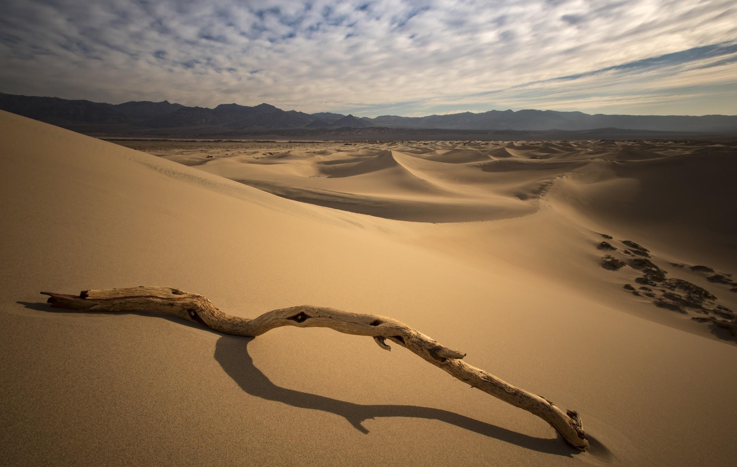 drift wood on desert