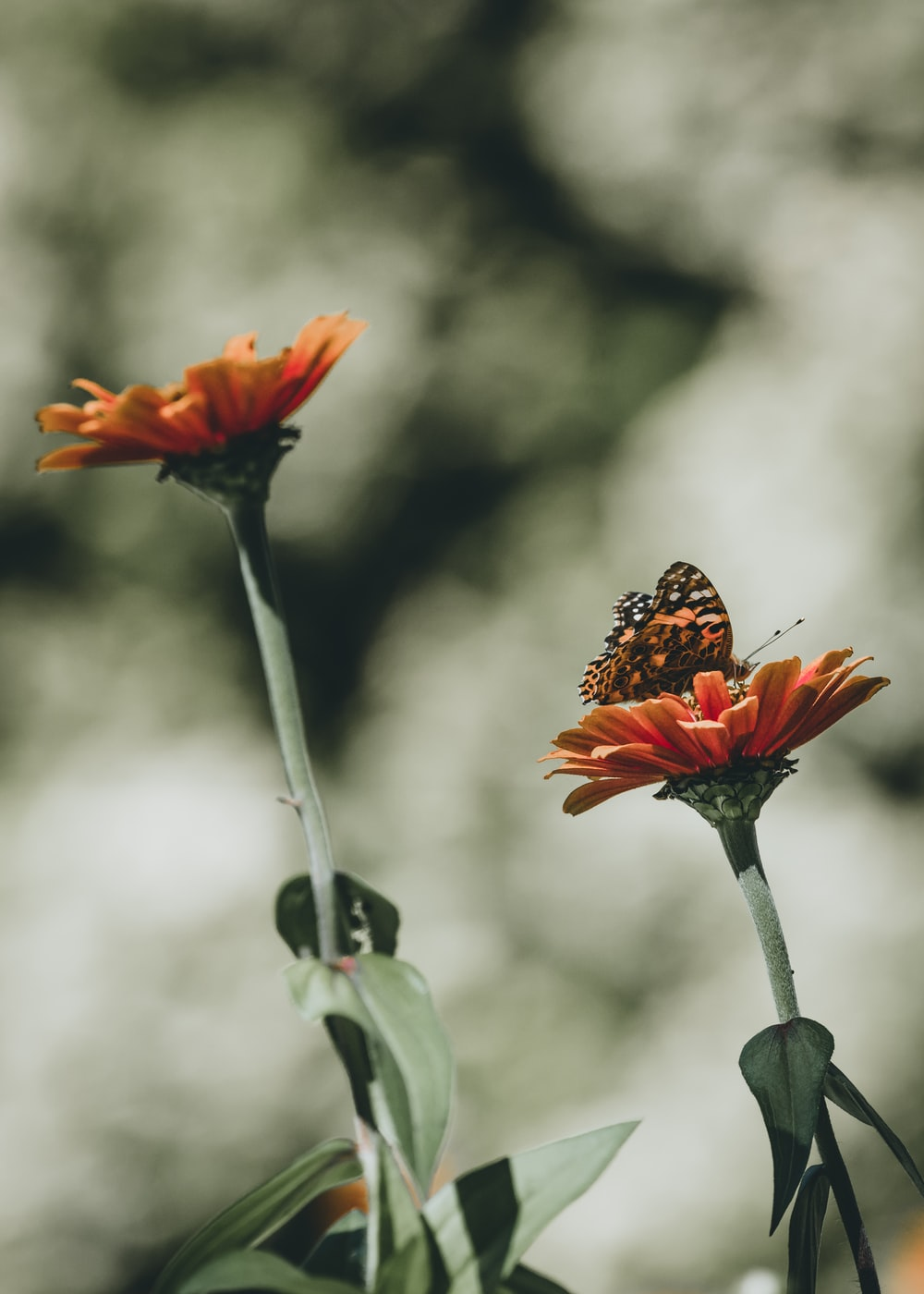 orange butterfly perched on top of flower