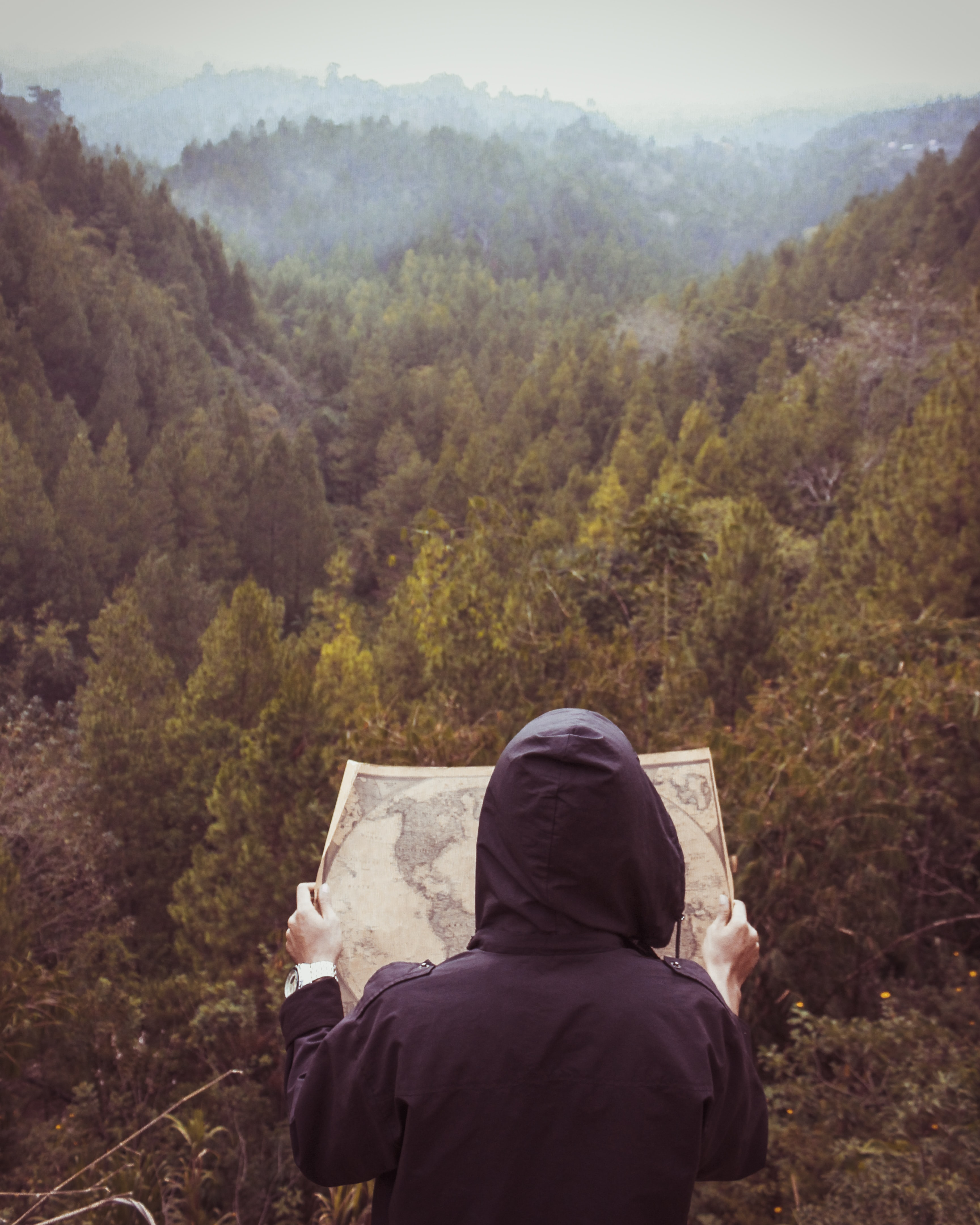 person facing forest reading map during daytime