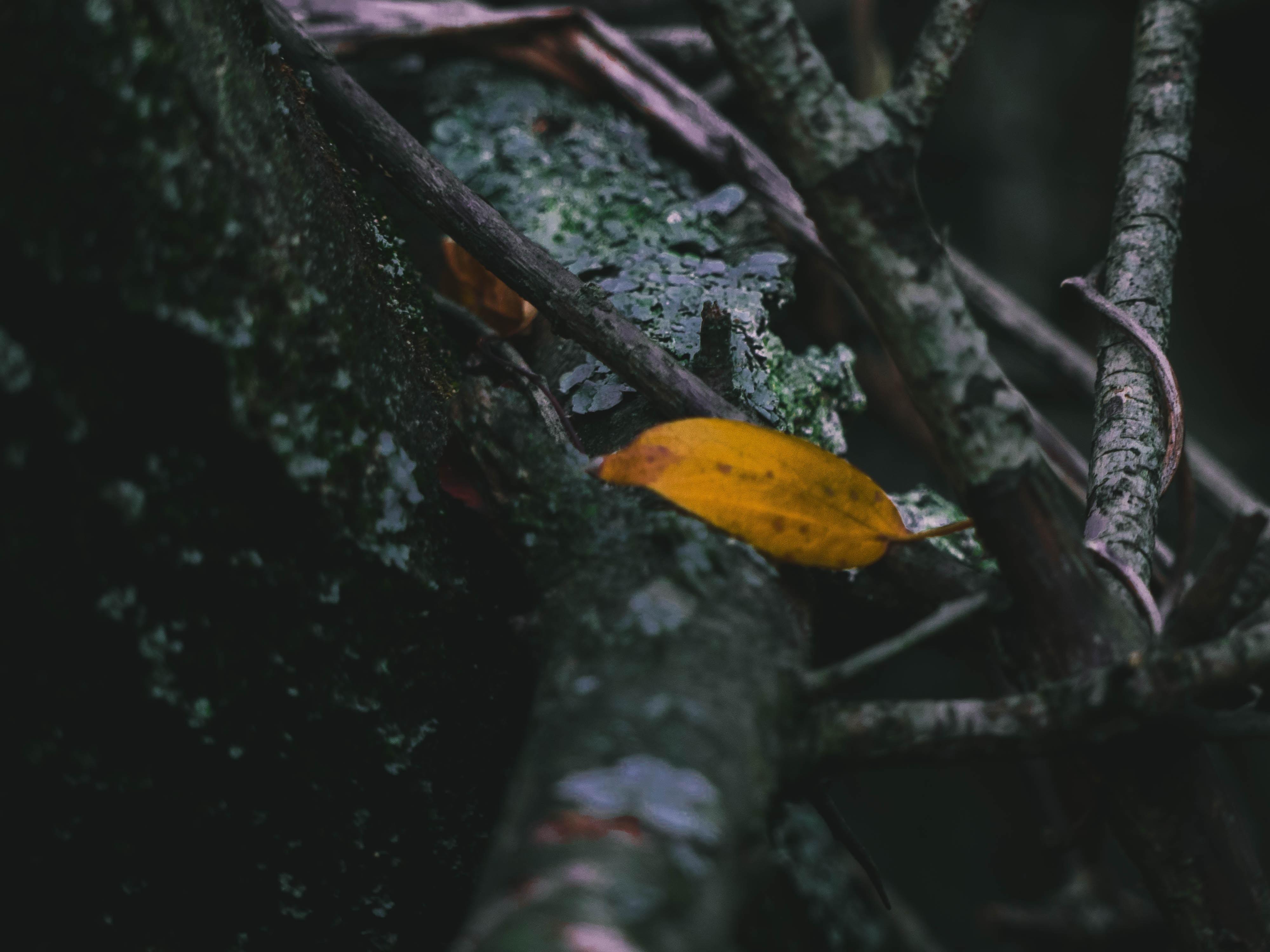 brown leaf on black tree